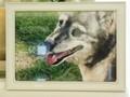 水戸市愛犬ルルちゃん