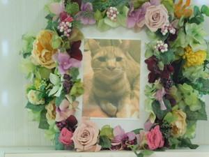 水戸市愛猫ハマちゃん