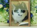 笠間市愛猫大吉ちゃん