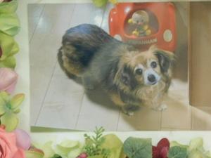 水戸市愛犬空ちゃん