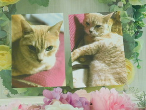 茨城町愛猫ティガーちゃん