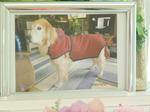 水戸市愛犬ボスちゃん