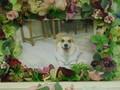 東海村愛犬あずきちゃん